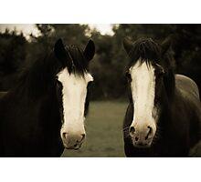 Two Horses  Photographic Print
