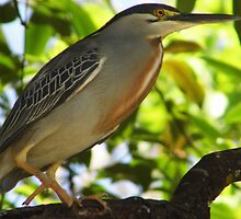 Heron, Brazil by TapSnaps