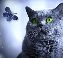 Blue and the Butterfly by Doreen Erhardt