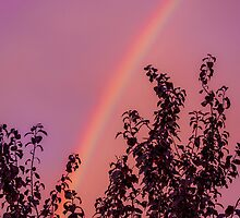 Sunset Rainbow by va103