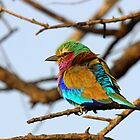 Pretty Bird!! by jozi1