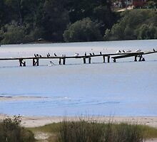 The Vantage Point' Water birds perch & observe at Evans Head.  by Rita Blom