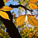 Golden Leaves of Autumn by Lisa G. Putman