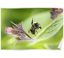 Feelin' the buzz... Poster