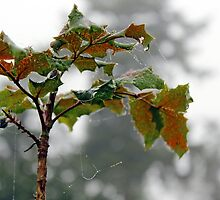 Fall Oregon Grape by blacknight