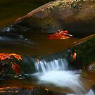 LITTLE RIVER CASCADE by Chuck Wickham