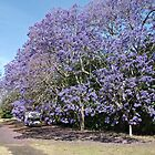 Jacaranda * Taree by Gary Kelly