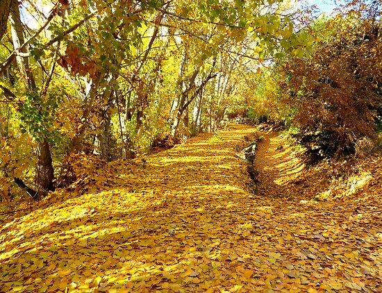 Love That Autumn Leaf Smell by trueblvr