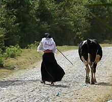 Girl Herding a Cow Down the Road by rhamm