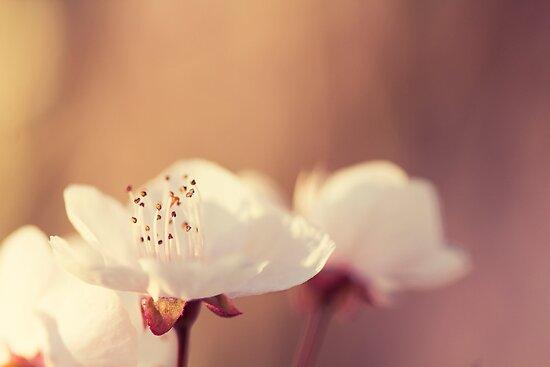 Signs Of Spring IV by Josie Eldred