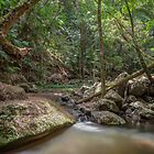 Rainforest Stream, Borders National Park by Dean Bailey