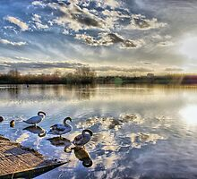 Lakeside Swans by NigelSpudCarrot