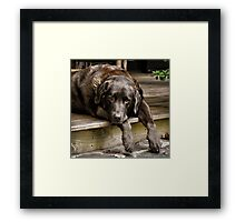 Paws off the Porch Framed Print
