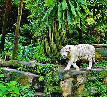 White Tigerrr by Fike2308