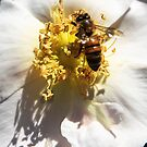 Wasp At Work  by heatherfriedman