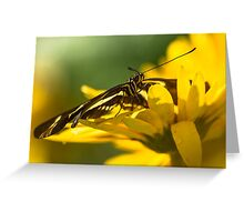 Butterfly on a Yellow Flower Greeting Card
