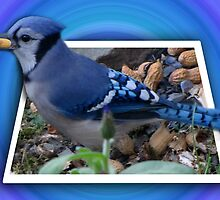 ¨¯`•.★BLUE JAY ENJOYING HIS SNACK OF PEANUTS¨¯`•.★ by ╰⊰✿ℒᵒᶹᵉ Bonita✿⊱╮ Lalonde✿⊱╮