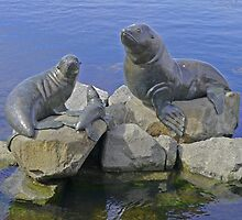 The Seal Family, Hobart, Tasmania, Australia by Margaret  Hyde