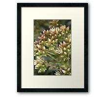 Succulent Green Framed Print
