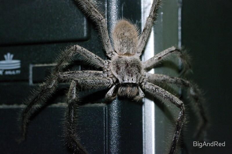 """Huntsman Spider"" by BigAndRed | Redbubble"