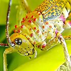 Grasshopper by globeboater