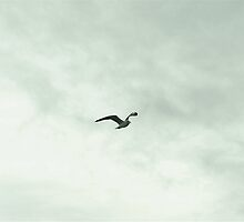 Tagus River Mid-Flight Seagull by Gonçalo Julião