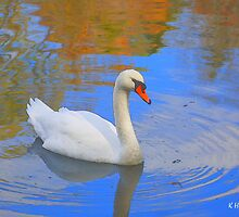 Swan Lake by Kenneth Hoffman