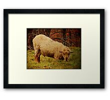Sheep With An Attitude Framed Print