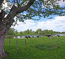 A true country scene by marchello