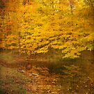Autumn Impressions   by Kathilee