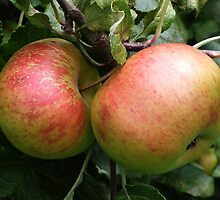 Apples, tinted In the cool light of autumn. by Yampimon