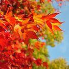 Autumn Leaves by mattslinn