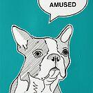 Boston Terrier by Adam Regester
