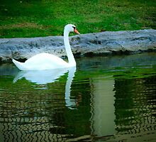 Swan in Lake by George Lenz