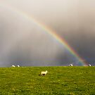 Rainbow ~ Sheep by Margaret S Sweeny