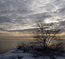 Early Morning Tree Silhouette on Silver Sky by Georgia Mizuleva