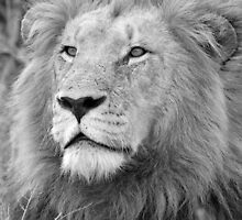 Portrait of a King of the Bush! by jozi1