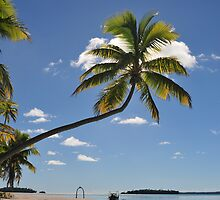 Palm Tree, One Foot Island, Aitutaki by jcimagery