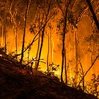 Gully Fire by Jason Ruth