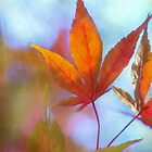autumn leaves by Teresa Pople
