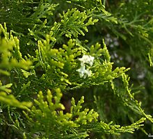 cypress decoration by tbshots