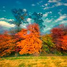 Autumn Foliage Zoom by KellyHeaton