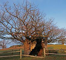 The Queen Elizabeth I Oak by Judi Lion