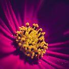 Cosmos blur by Fernando Rosenberg
