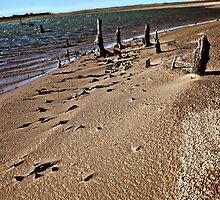 Twiggy Beach by AllisonDesign