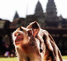 Baby & Mother: Wild Monkeys at Angkor Wat, Cambodia by thewaxmuseum