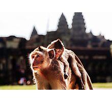 Baby & Mother: Wild Monkeys at Angkor Wat, Cambodia Photographic Print