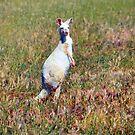 Albino Kangaroo 2 by Bami
