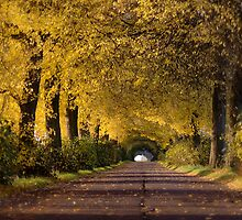 Golden Tunnel by KLIMAS
