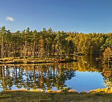 Tarn Hows - November Sunshine by VoluntaryRanger